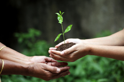 The benefits of tithing can include something as simple as making a contribution.  Here, a plant is given to another person.