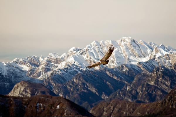 Forgiveness works:  an eagle, in Alaska, representing freedom you can feel when you forgive.