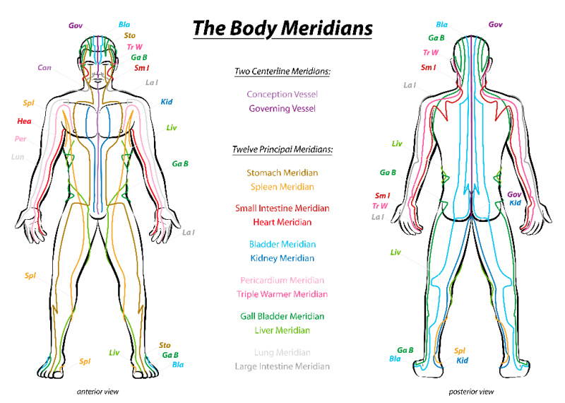 Meridians, shown here, are an important part of the human energy field.