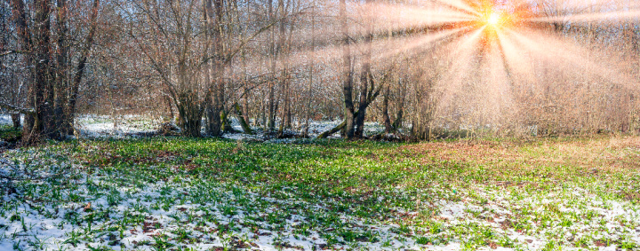 Tithe and Offering:  tithing can encourage prosperity, but it can start like the grass growing amidst a cold frost as in this photo.