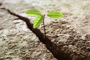 Plant breaking through concrete.  This photo symbolizes that vibrational energy healing is a journey requiring inner growth.