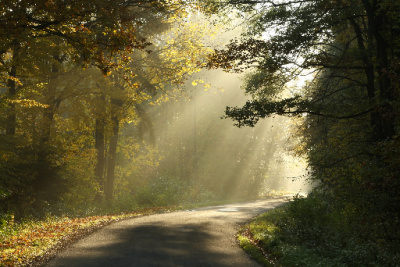 Forest path:  Light the way with abundance affirmations.
