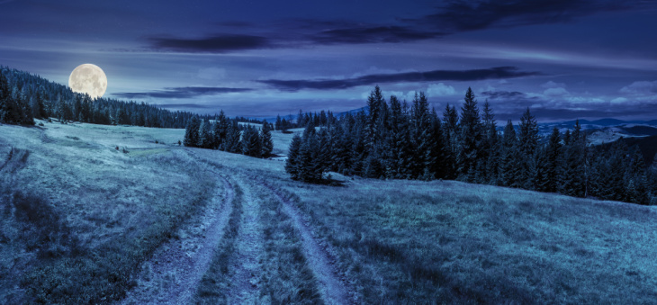 The journey of prosperity consciousness symbolized via a moonlit path making its way around forest trees.