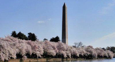 The Washington Monument, with cherry blossoms.  The DC/Virginia area is where this global prosperity project was born.
